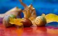 Fall acorns...