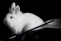 The magic rabbit - Milo