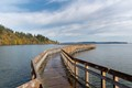 Nature Boardwalk at Nisqually