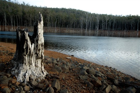 wellington dam stump