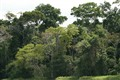 Flooded Amazon Rain Forest