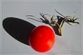 Fruit & Discard