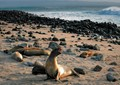 Galapagos Seal Beach
