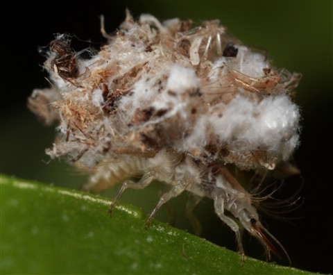 Junk Bug