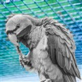 Parrot BW