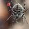 Demonic Spider 1