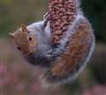 That Squirrel Again