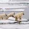 Svalbard 2018 D5-215proof (1)