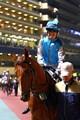Horse, Happy Valley, Hong Kong