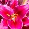 Flowers_2014-16Z