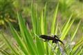 Wildlife060706-029_pp
