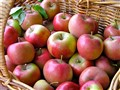 A Basket of Fuji Apples