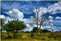 breathless clouds - Caprivi