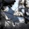 Cheh_F_Snow Bird & Baby_125_16X24