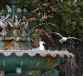 Seagulls Chillin'