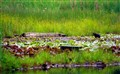 Beaver pond3