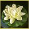 White Flower challenge P1000766