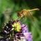 WinemaNF_DragonflyLupine_JacksonCr_1X_071306_1200px_reduced