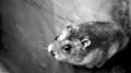 hamster michal herrmann