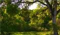Oak shade