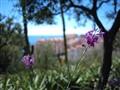 Saint-Martin Gardens, Monaco