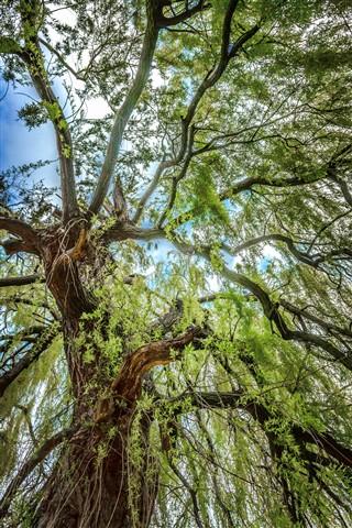 Brugge Tree