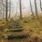 woods steps_1p