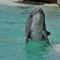Seaworld - Dolphin 2