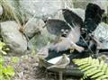 Conflict at the old birdbath