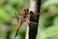 Dragonfly taking a break