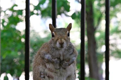 Squirrel in Manhattan