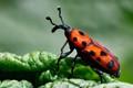 Orange Bug On A Leaf