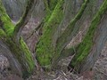 IMGP0156_tree
