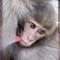 Baby monkey a