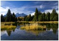 The Grand Teton reflected in the beaver pond at Schwabacher Landing in Grand Teton National Park, Wyoming, USA