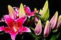 Flowers_2014-8-3Z
