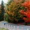 Autumn Cycling 1 - 2011-11-13 v1