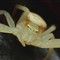 crab-spider-dpreview