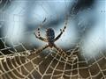 Moring Web