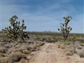 Eastern Mojave