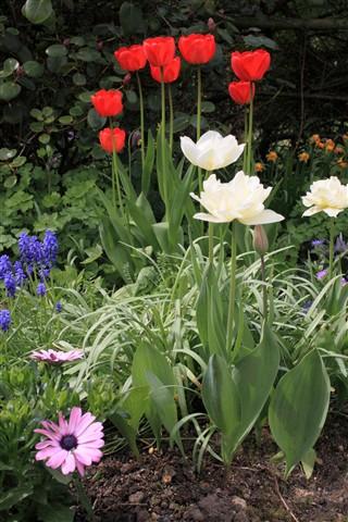 Garden DP Gallery