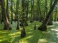swamp  6400 iso