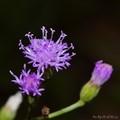 purple small flower
