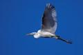 little egret getaway