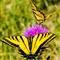 butterfly_DSC_7641