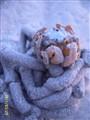 crab in palawan