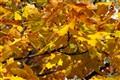 leaves_DP