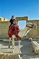 Camel, Palmyra