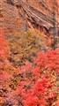 Zion Canyon Fall Colors