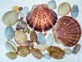 Shells galore